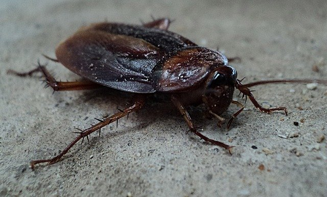 Delaying German Cockroach Treatment? Read These Facts First